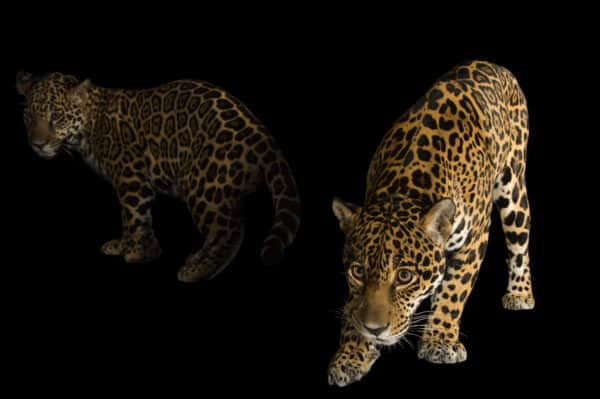 Fox Networks Group - National Geographic - Joel Sartore - Brand Event